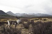 Deer looking over at the beautiful nature scenic.