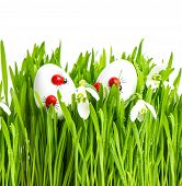 Fresh Green Grass With Flowers And Easter Eggs