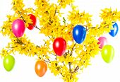 Forsythia Flowers And Colorful Easter Eggs