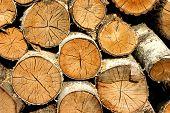 Birch Fire Wood