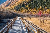 Wooden walkway in Colorful Autumn park