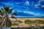 stock photo of tarifa  - Sandy beach and palms - JPG