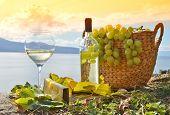 Wine and grapes. Lavaux region, Switzerland