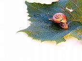 Slow Slug poster