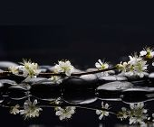 Branch sakura flowers with therapy stones