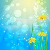 Beautyful camomiles. Vector of spring background