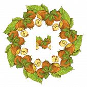 Circle Ornament With Highly Detailed Hand Drawn Hazelnuts Isolated On White Background. Pattern Endl