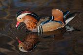Mandarin reflection