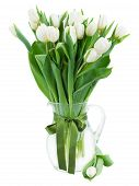 foto of bosoms  - bouquet of fresh  white  tulips in glass vase with green bow   isolated on white background - JPG