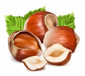 Hazelnuts with leaves. Photo-realistic vector illustration