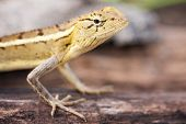 Lizard On Tree.