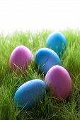 Many Pink And Blue Easter Eggs On Green Grass