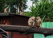 A Family Of Baboons