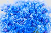 Bouquet of cornflower flowers with bokeh, floral abstract background