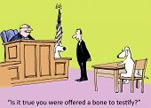 Testify in Court