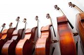 picture of double-bass  - row of double basses leaning against a wall - JPG