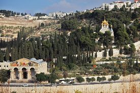 image of magdalene  - Church of All Nations and the golden domes of the Church of Mary Magdalene - JPG