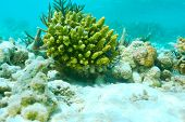 foto of coral reefs  - Coral reef at South Ari Atoll - JPG