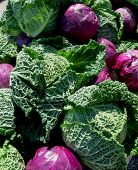 Purple And Green Cabbages