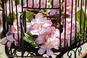 stock photo of caged  - decorative flowers in retro vintage bird cage - JPG