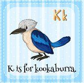 picture of letter k  - Flashcard letter K is for kookaburra - JPG