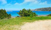 picture of vegetation  - vegetation by Capo Testa coastline in Sardinia - JPG