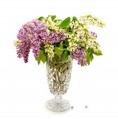 image of violet flower  - bouquet of violet and white lilac flowers in crystal flower pot on white background - JPG
