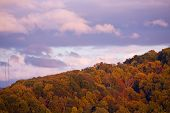 stock photo of knoxville tennessee  - Fall color on Signal Hill in Knoxville - JPG