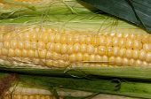 stock photo of maize  - Corn or maize is on sale at the Bazaar - JPG
