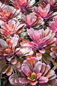 picture of bromeliad  - Bromeliad vertical gardening as a background  - JPG
