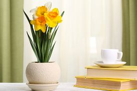 stock photo of daffodils  - Beautiful daffodils in pot with books on fabric background - JPG