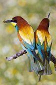 Enamored Birds