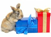 foto of funny animals  - little rabbit near the boxes with gifts isolated on white - JPG