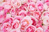 big bunch of multiple pink roses from top, of