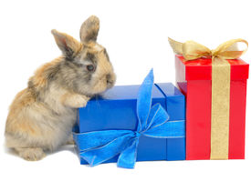 stock photo of funny animals  - little rabbit near the boxes with gifts isolated on white - JPG