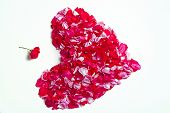 Love And Tenderness, Gift For Valentines Day. Valentine Icon. Heart Of Pink Rose Petals Isolated On poster