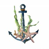 Watercolor Anchor With Laminaria Branch And Coral Reef. Hand Painted Underwater Illustration With St poster