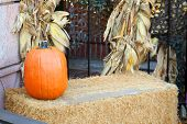 Pumpkin scene
