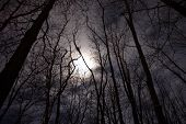 Full Moon Above The Tree Tops Of A Woods At Night, Spooky, Mysterious, Haunting, Halloween poster