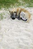 Homeless Dog At Beach