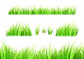 Grass Vector Isolated On White Background. Tufts Of Grass. Green Summer Lawn Set. Vector Illustratio poster