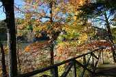 Fall Foliage Over The Genesee River