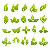 Illustrations Of Stylized Plants To Design Logos. Vector Leaf Green, Natural Organic Bio And Eco poster