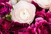 Persian Buttercup. Bunch Colorful And Pale Pink Ranunculus Flowers Light Background. Glass Vase On P poster