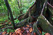 Üppigen Regenwald - St. Kitts