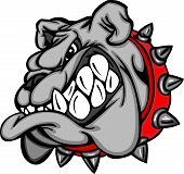 foto of growl  - Cartoon Image of a Bulldog Mascot Head - JPG