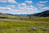 Valle de Lamar en Yellowstone