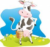 Funny cow carry wooden pail with milk