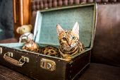 Cat In A Suitcase - Cat Laying Inside Travel Luggage - Bengal Cat poster