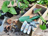 Gardening Tools In A Box With Vegetable Seedlings And Seeds With Gardening Tools On Wooden Backgroun poster